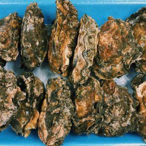 Tamuras-Market-Oysters